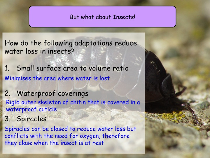 6.5 Limiting water loss NEW Year 12 Biology specification