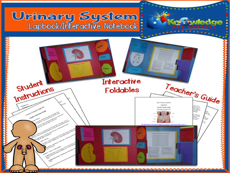 Urinary System Lapbook
