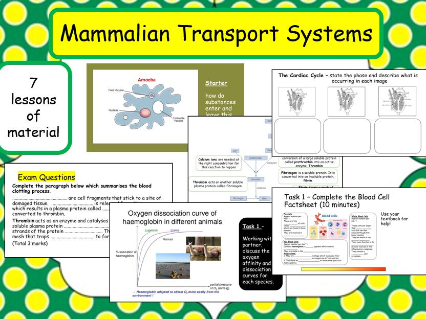 IAL Mammalian Transport Systems