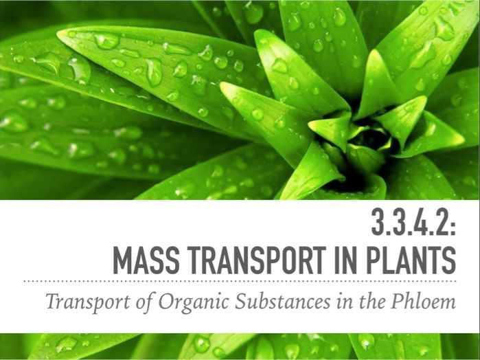 Mass Transport in Plants A-Level Biology