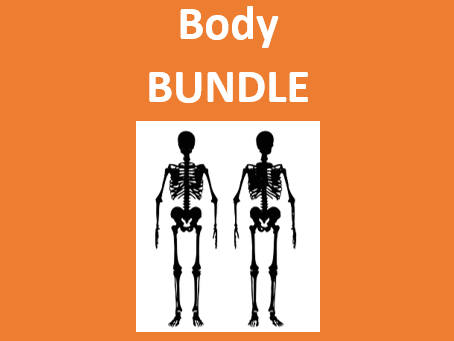 Corpo (Body in Portuguese) Bundle