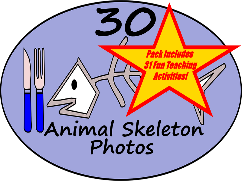 Animal Skeleton Bones - PowerPoint  + 31 Fun Teaching Activities For These Cards