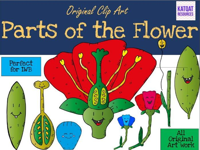 Parts of the Flower Clip Art