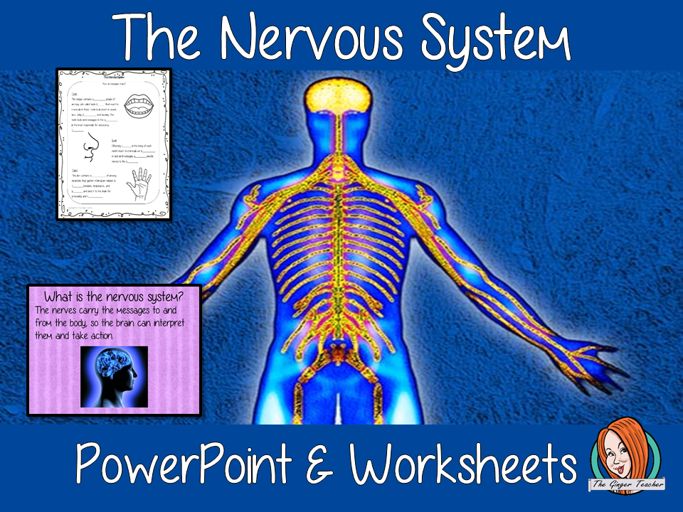 The Nervous System Science Lesson