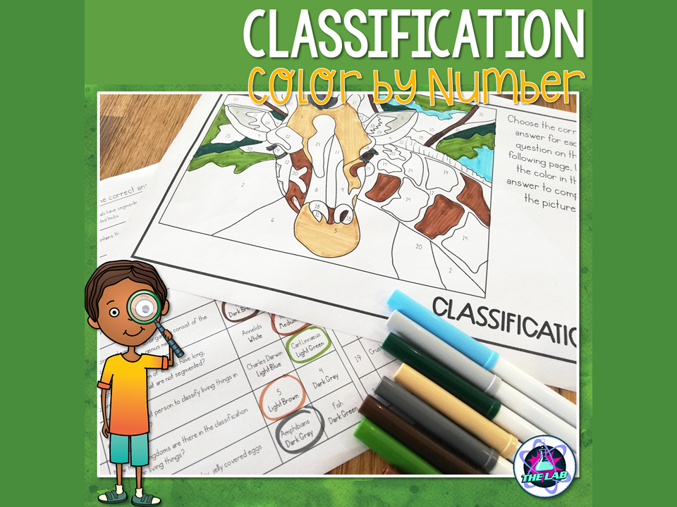 Classification Colour by Number Activity