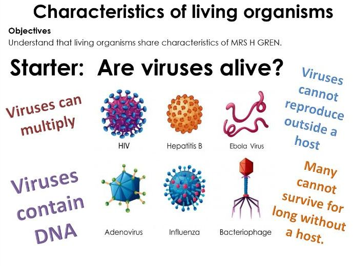 IGCSE Biology MRS H GREN Characteristics of living organisms, organisms, lesson with worksheets.