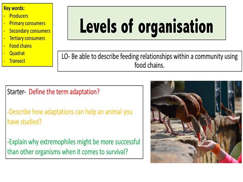 Levels of organisation