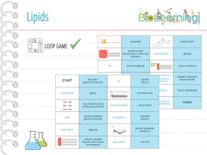 Lipids - Loop Game (KS5)