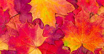Poems for Spring, Summer, Autumn and Winter