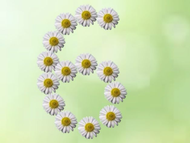Numbers 6-10 Daisy Theme