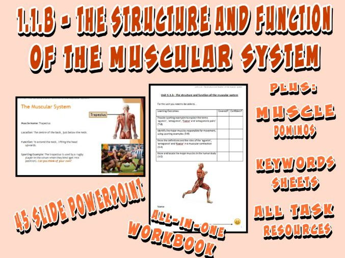 OCR GCSE PE 9-1 (2016) 1.1.b - The Structure and Function of the Muscular System - Unit of Work