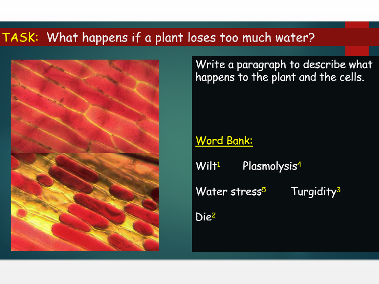 OCR A Level Biology (H020) Module 3 - Plant transport - Adaptations of plants to water availability
