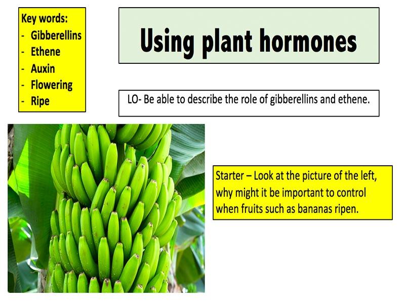 Using plant hormones