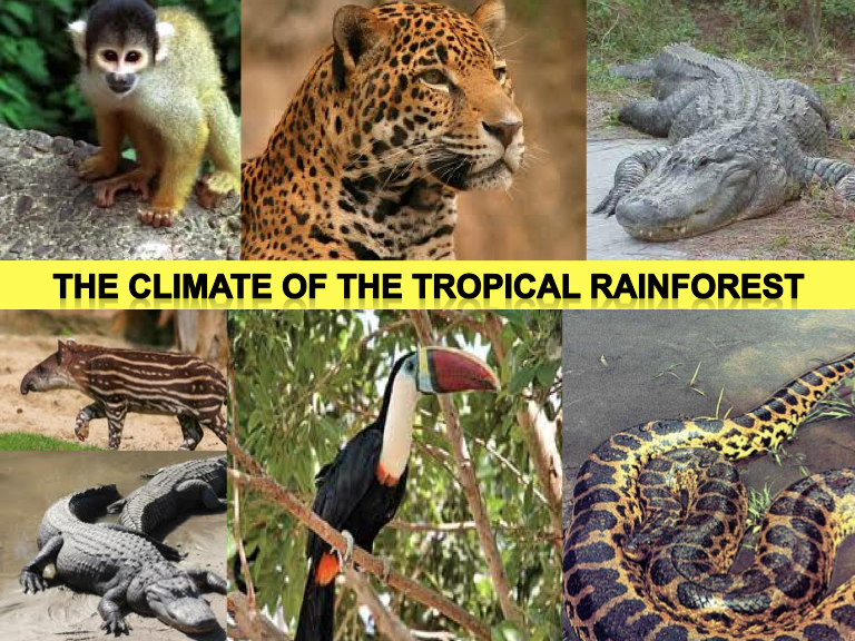 The Rainforest Climate! Ecosystems