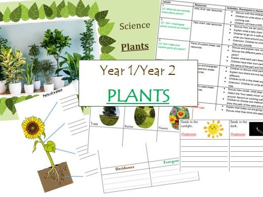 Year 1/Year 2- PLANTS- Whole Science Unit Term- Planning, PowerPoint, Resources- 10 editable lessons