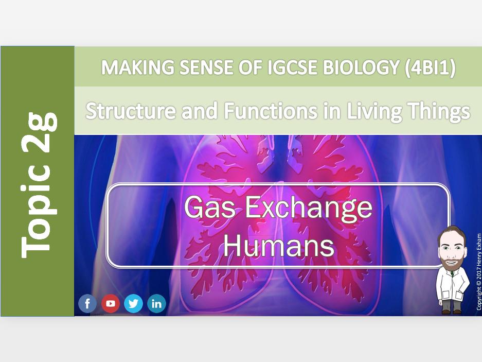 IGCSE Biology 9-1 - 2g Gas Exchange - Humans