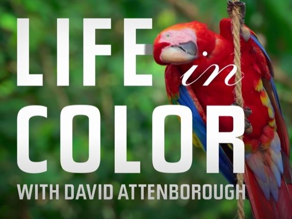 "David Attenborough's ""Life in Colour"" (Episode 2) Worksheet"