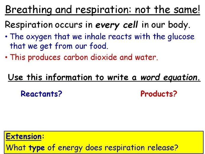 Aerobic Respiration Year 8 Lesson PowerPoint KS3 8Ca Breathing And Respiration Topic