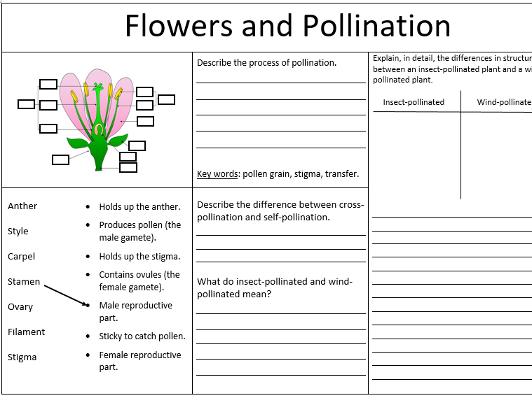 Pollination, Fertilisation and Germination - KS3 worksheet