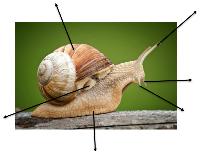 Giant African Land Snail Non-Fiction Planning