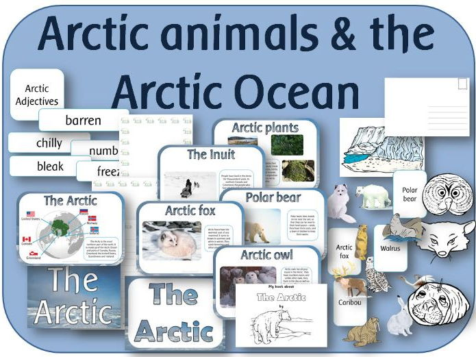 The Arctic: ( animals and Ocean) powerpoint,display, worksheets and activities
