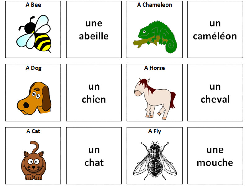 French Vocabulary Card Sorts by ineedtoteachthat - Teaching ...