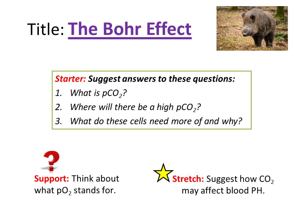 The Bohr Effect - OCR AS/A Level Biology