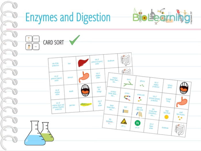 Enzymes and digestion - Card sort (KS3 / KS4)