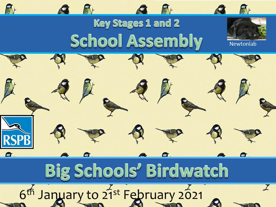 Big Schools' Birdwatch Assembly - Key Stages 1 and 2