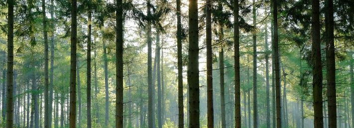 Topic 8 Forests Under Threat - Conserving the Taiga