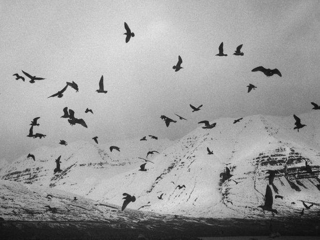 Derek Walcott 'The Flock' - Poem Analysis