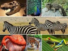 OCR Biology Reasons to protect biodiversity