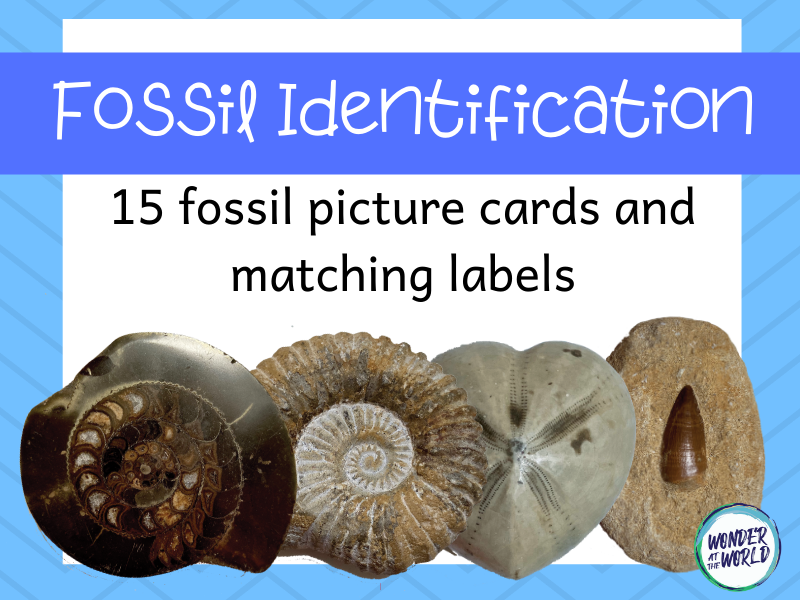 Fossil Identification Activity KS2