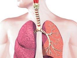 GCSE PE (AQA) - Cardio Respiratory System
