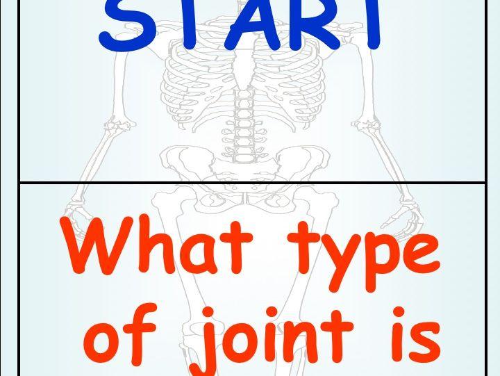Skeletal System Dominoes GCSE PE Revision/Starter