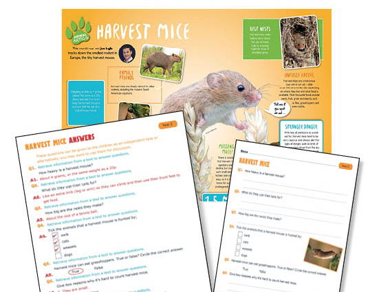 Year 2 Harvest Mice Reading comprehension
