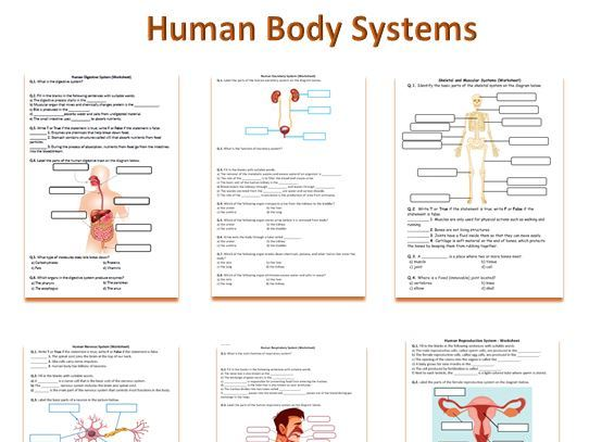 Human Body Systems Worksheets | Distance Learning
