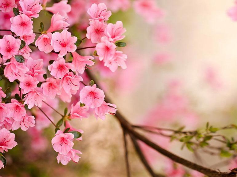 'Spring' PPT William Shakespeare