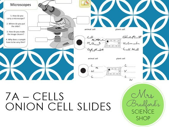 Cells - Onion Cell Slides