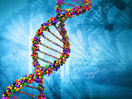 Genetics, Inheritance, Protein synthesis and Evolution for A Level