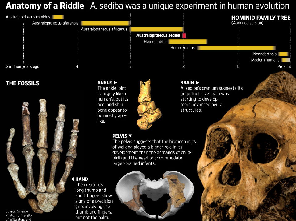 Think like a Paleobiologist! Human Evolution and the importance of Australopithecus sediba