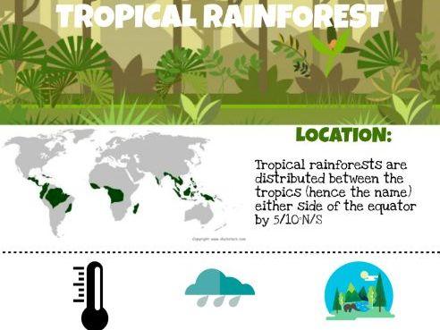 Rainforest Infographic
