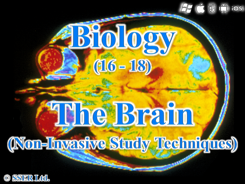 C.2.a. The Brain (Non-Invasive Study Techniques)
