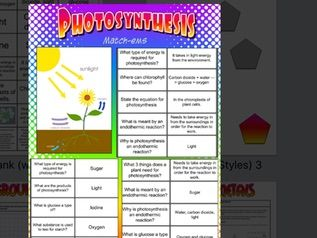 Photosynthesis Questions Worksheets and activities Foundation