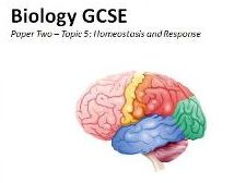 Topic 5 Homeostasis Booklet GCSE Biology AQA