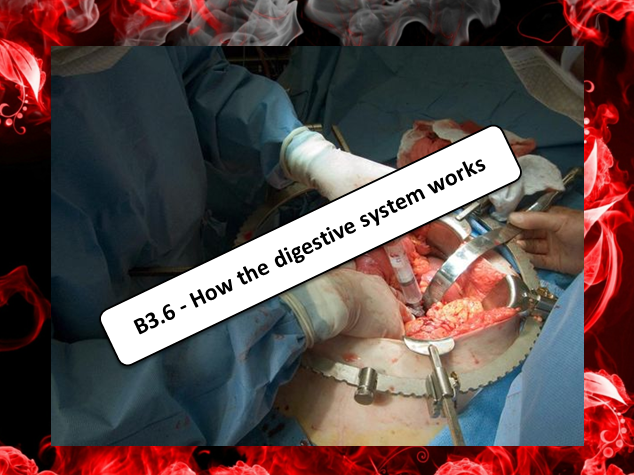 GCSE – How the Digestive System Works (AQA B3.6)