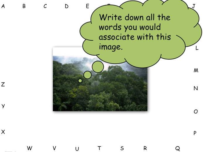 Tropical Rainforest Structure (Ks3)