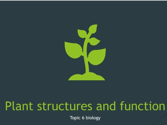 plant structures and function