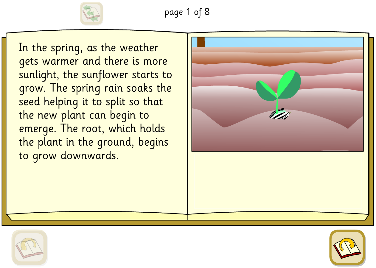 Sunflower Lifecycle Interactive Explanation Book - KS2 Literacy