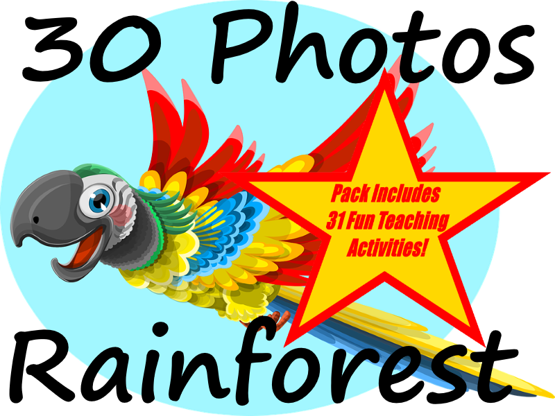 30 Photos Of The Amazon Rainforest + 31 Fun Teaching Activities For These Cards